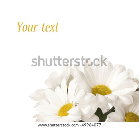 daisy flowers isolated on white background - stock photo