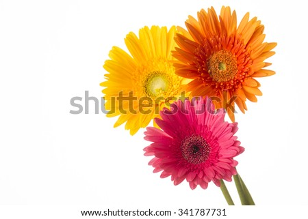 Daisy flowers isolated over white background - stock photo