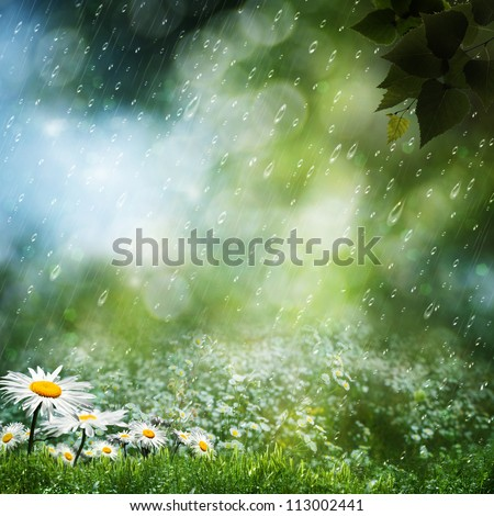 Daisy flowers under the sweet rain, natural backgrounds - stock photo