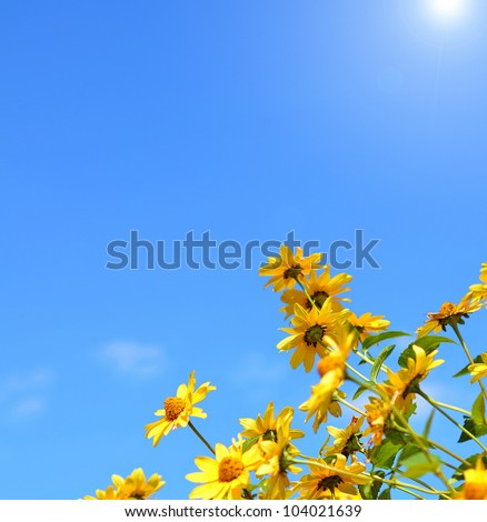 Daisy flowers. Yellow flowers against blue cloudy sky - stock photo