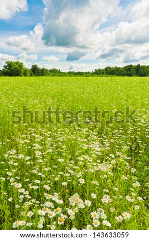 Daisy in a meadow - stock photo