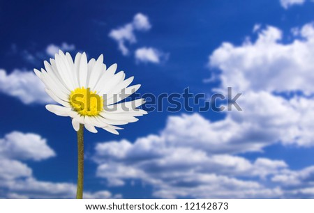 daisy in front of blue cloudy sky
