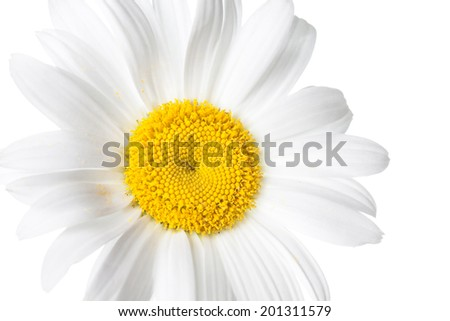 Daisy, macro. Camomile on white background. Beautiful white flower. Nice image, wallpaper, greeting card.