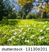 Daisy meadow in park on sunny day - stock photo