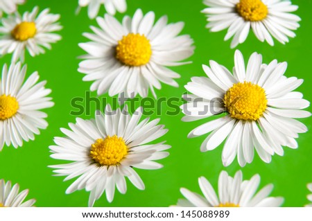 daisy on a green background - stock photo