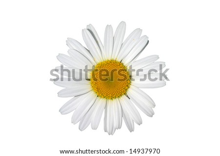 Daisy with clipping path isolated on white