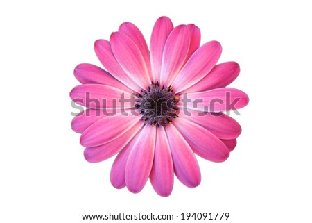 Daisy with white background