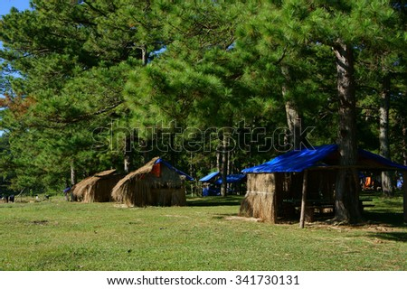 Dalat countryside landscape, Suoi Vang, place for travel, camp under pine tree among pine forest, beautiful scene for ecotourism at Da Lat, Vietnam, fresh air, green grass, harmony nature