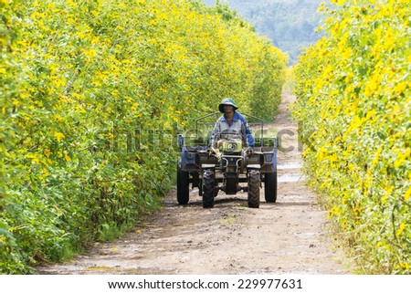 DALAT, VIETNAM - NOV 25: farmer used unidentified vehicles used to transport vegetable on flower road, Da Lat, Vietnam. On Nov 25, 2014. Da lat is one of the best tourism city in Vietnam. - stock photo