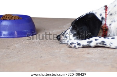 dalmatian dog no purebred laying on a garage floor with it's food bowl, die cut isolated on white background - stock photo