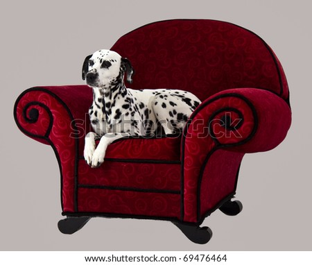 Dalmatian Sitting on Red Chair - stock photo