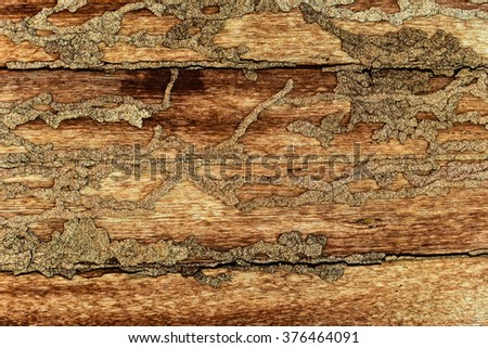 Damaged by termites eat wood