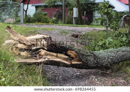 Damaged fallen tree after a strong storm