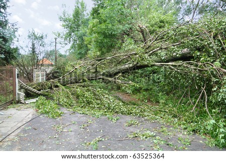 Damaged fallen tree on a rural road after a strong storm - stock photo