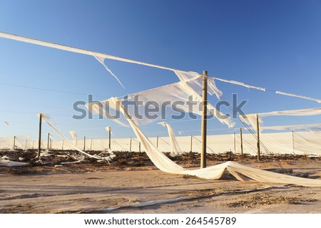 Damaged plantation in Western Australia after the cyclone - fallen stakes, torn mesh and uprooted crops. - stock photo