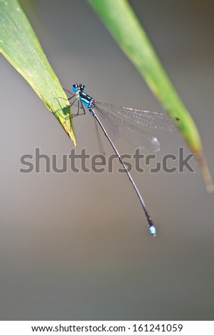 damselfly resting on branch over river in forest