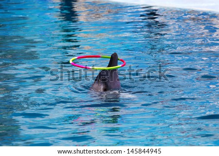 Dancing Dolphin with Hoop - stock photo