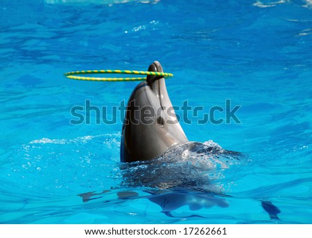 dancing dolphins with hoop - stock photo