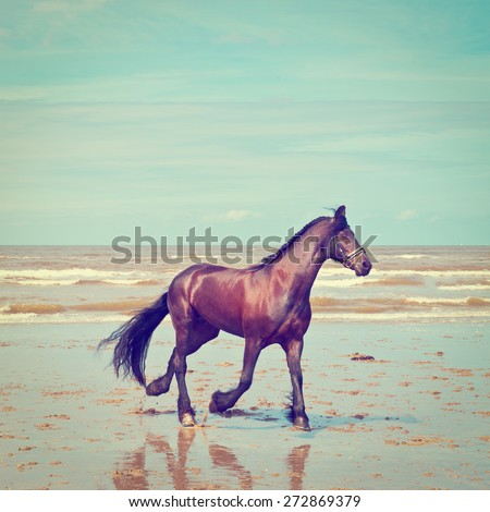 Dancing Horse on the North Sea Coast in Zealand in Netherlands, Instagram effect - stock photo