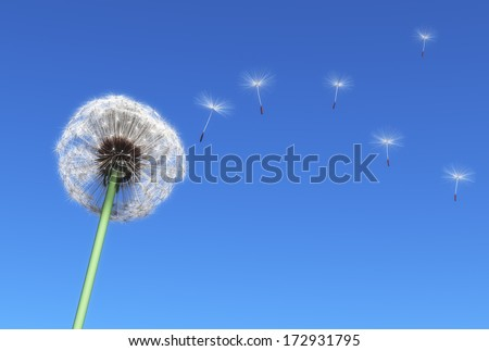 dandelion and some flying seeds carried by the wind on a blue sky as background - stock photo