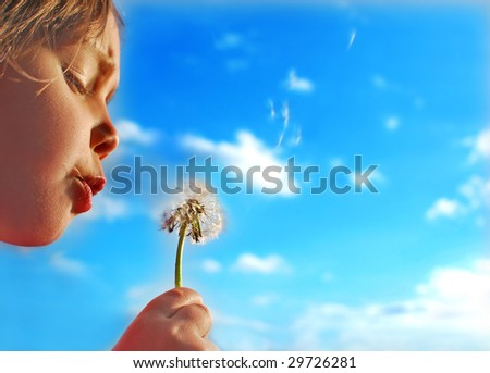 Dandelion and the blue sky - stock photo