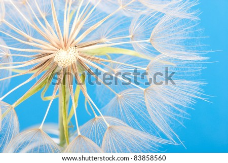 Dandelion extremely closeup on blue sky background - stock photo