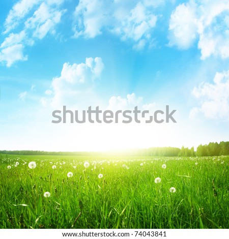 Dandelion field,blue sky and sun. - stock photo