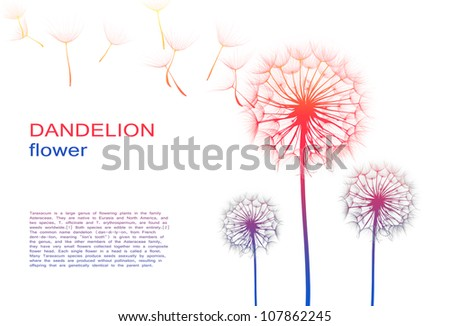 dandelion flower on a white background, silhouette - stock photo