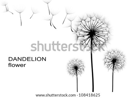 dandelion flower  on a white background, silhouette