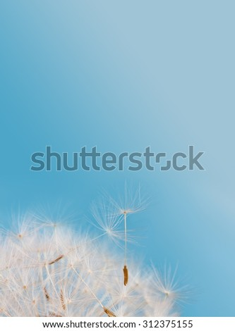 Dandelion flower photography poster template. Macro nature shot. Dandelion seeds against blue sky background. New life concept image. Vertical format. Closeup, shallow depth of field. copy space - stock photo