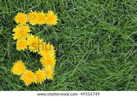 Dandelion flowers in a shape of a Five on green grass background. - stock photo