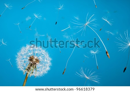 dandelion fluff from aircrafts in the sky - stock photo