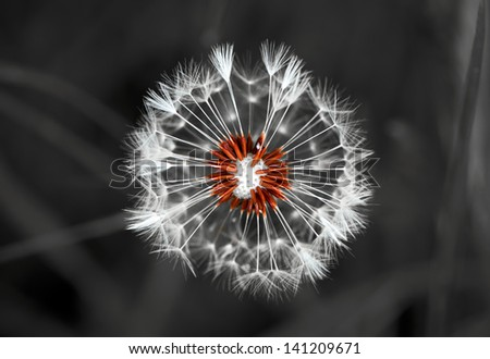 Dandelion from top (closeup) - stock photo