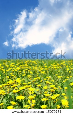 dandelion green field