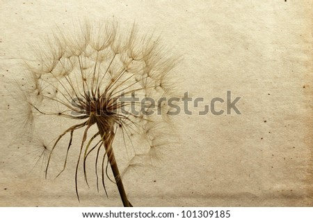 Dandelion in the old retro background