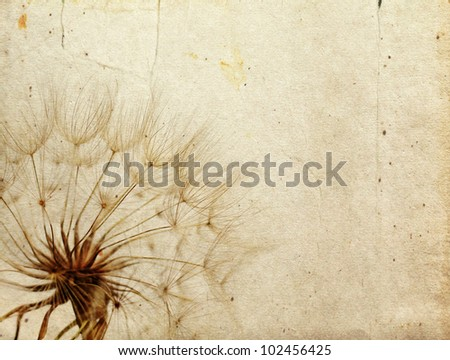 Dandelion in the old retro background - stock photo