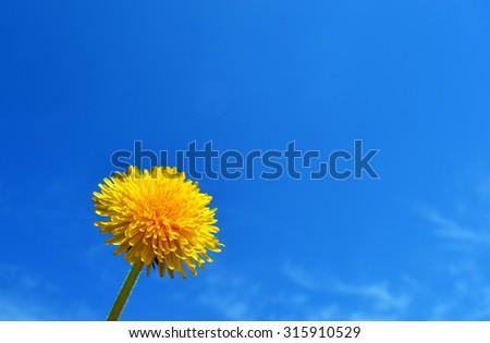 Dandelion in the sky background - stock photo