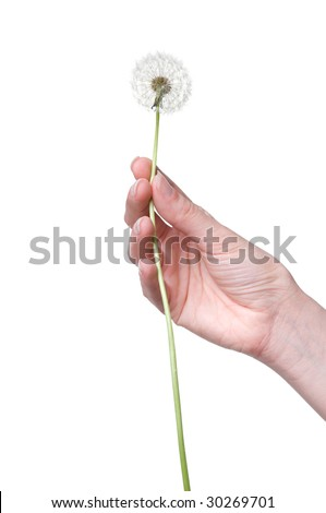dandelion in the woman's hand