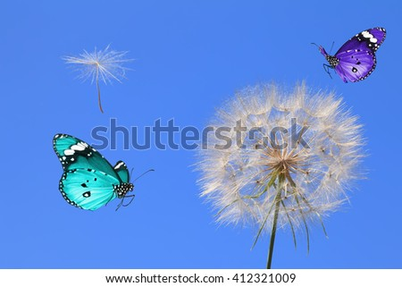 Dandelion losing fuzzes and Butterfly. Nature abstract  - stock photo