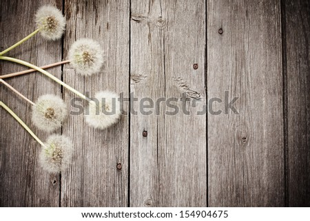 dandelion  on a aged wooden background - stock photo