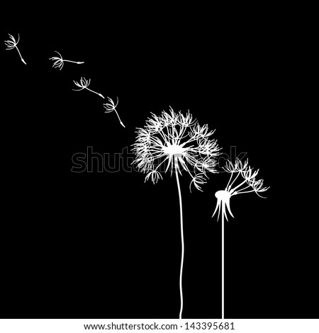 dandelion on a black background. Raster