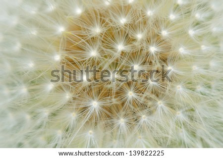 Dandelion on a meadow.Macro. - stock photo