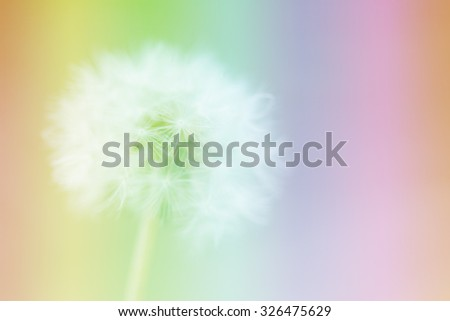 Dandelion on the abstract colorful blur background. - stock photo