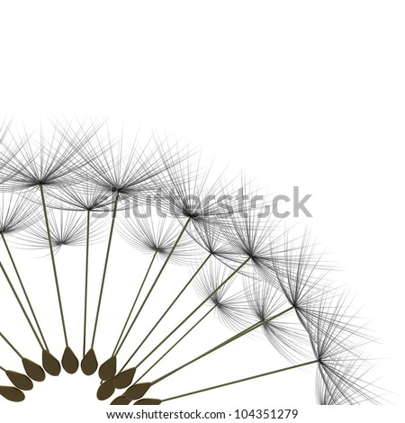 dandelion parachute on a white background - stock photo