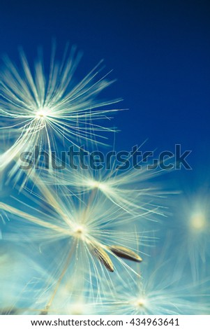 Dandelion parachutes by the wind on a white background. - stock photo