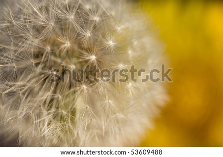 Dandelion Seed background - stock photo