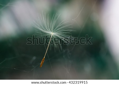 Dandelion seed flying through the air. Gentle blur of color on a green background - stock photo