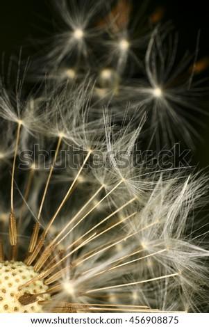 Dandelion seed head - stock photo