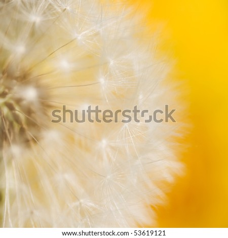 Dandelion Seed Head abstract background - stock photo