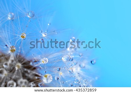 Dandelion seed head on blue background - stock photo